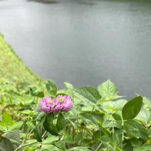 千鳥ヶ淵から霞ヶ関までウォーキング虫も撮ったよ!