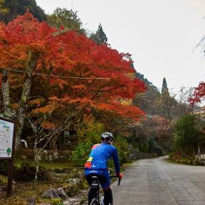 紅葉サイクリング