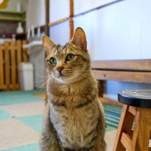 【尾道 猫好きの聖地】 「ねこ喫茶 ユトレヒト」に行ってきました。【尾道猫カフェ】