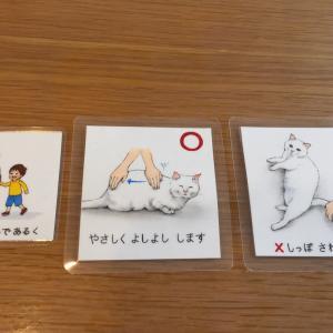 作成していた絵カード