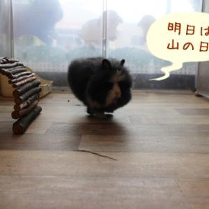 うきうきなライオンヘッドちゃん☆