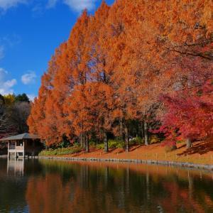 紅葉~Utsunomiya Central Park~
