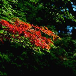 小さい秋 見つけ