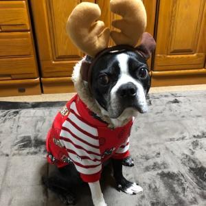 こえもん君のクリスマス♪