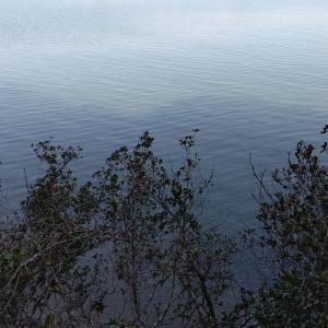 徳島県南部でオフショア!マイボートの駆動力で大物たちを一網打尽!