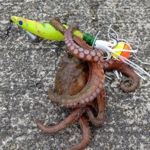 防波堤に守られた漁港で『自作針』を使ってタコ釣りを楽しんできた