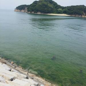 【魚を海に帰そう】Return Fish to the Sea.