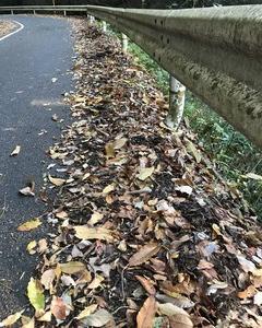 堆肥の作り方 無料でできる『落ち葉の堆肥』(腐葉土)