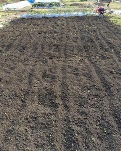 エダマメの栽培方法2018(おいしい茹で方まで)