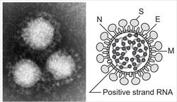 コロナウイルスの感染者ってどのくらいいるんだろう?