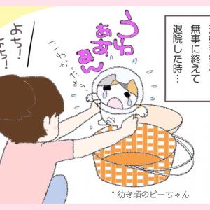 第41話 : 恋するビーちゃん?