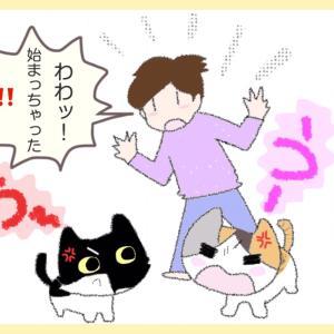 第47話 : うーうー☆合戦 ビーちゃん編