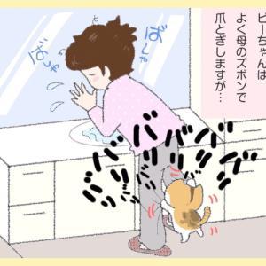 第60話 : 爪とぎ☆お母シャン