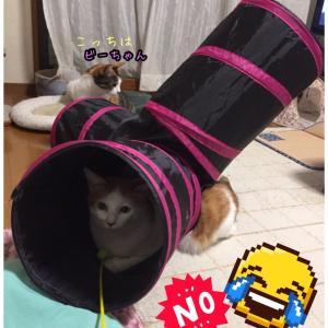 ワイルド☆猫じゃらし