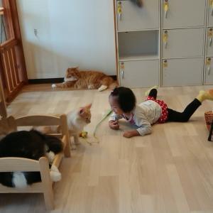 はじめての 猫カフェ