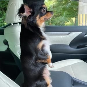 またに愛犬マロの事