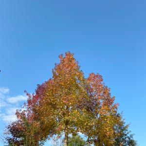 色とりどりの芸術の秋