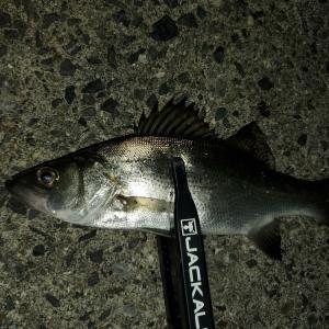 Deeper持って、釣り場を探索・・・^^