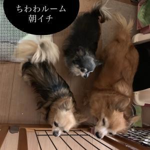 9/21 今朝のわんこ/老犬感 体力差