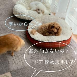 10/7 今日のわんこ 寒いからあ〜