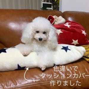 11/12 動画 パワフルちわわ女王・徐々にクリスマスっぽく飾る