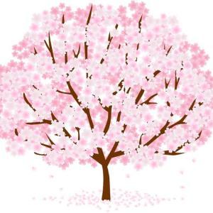 春に読みたい桜の絵本