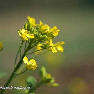 家の花・・・1