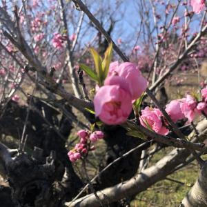 春 ゆめみづき