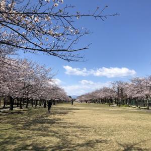 なごりの春