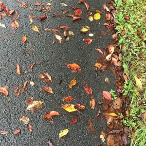 秋のまんなか