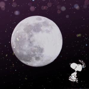 天使の羽根と月に願いを☆