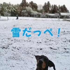 二月一日、雪景色