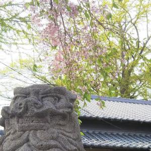おみくじは吉凶よりも和歌や漢詩を自分に響かせてこそ生きてくる。