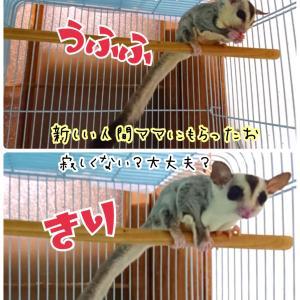 コッピの巣立ち(*´ω`*)