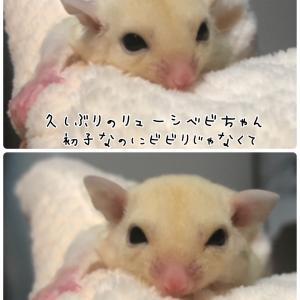 双子ちゃんにヤキモチ(꜆꜄•௰•)꜆꜄꜆