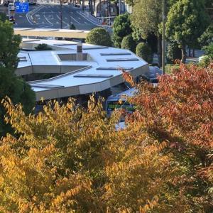 浜松はアクトシティ脇 街路樹の紅葉? と遠州鉄道赤電(2019年11月 オマケは富士山コスプレ世界大会)