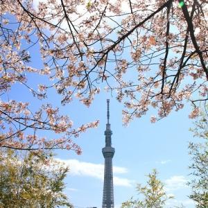 東武鉄道電車とスカイツリーとソメイヨシノ 昼と夜 (2014年4月 在庫でドン)