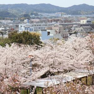 静岡県西部 掛川城から見える新幹線とソメイヨシノ (2016年4月  在庫でドン)