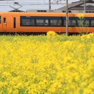 三重県は近鉄長島-桑名 菜の花と近鉄特急 (2012年4月 在庫でドン)