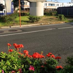 近所の道路脇に咲く花と普通列車 (2020年5月 近所でドン)