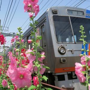 静岡鉄道はおなじみ「タチアオイと1000形」 (2018年5月 在庫でドン)