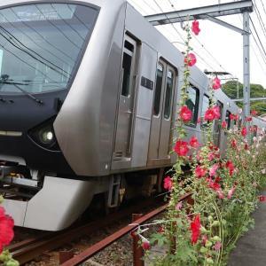 静岡鉄道はA3006とタチアオイ 一年ぶりの撮影 (2020年6月 音羽町-日吉町)