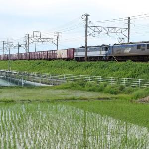 天竜川駅東 田んぼと貨物列車の風景(2020年7月)