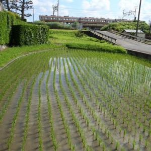 浜松市東区 材木町付近付近の風景 その1(2020年6月ほか 普電、EF65貨物)