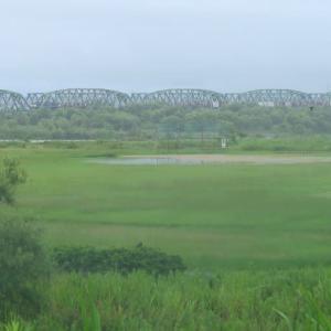 天竜川橋梁を渡るEF65貨物 (2020年7月ほか 専用線跡を辿る旅 続き)
