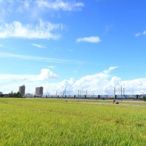 EF210-101 2052レ トヨタロンパス (2020年9月 豊田町駅近くの田んぼ)