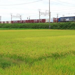EF210-901 1060レほか貨物列車 (2020年9月 8091レやEF65 2089)
