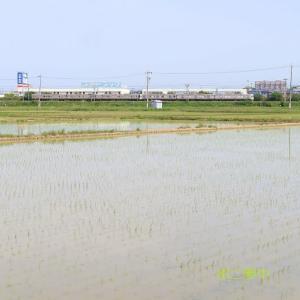東海道本線は磐田-御厨の田園風景(2021年5月  オマケはEF210)