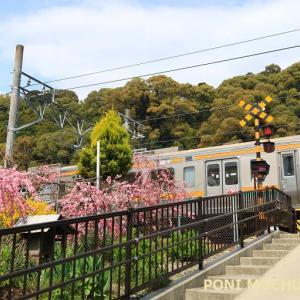 東海道本線は興津地区 春と夏の光景 (2021年4月と昨年夏 オマケは清水市内線跡)
