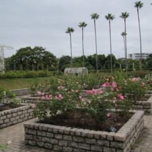 長居植物園のバラ園の様子。